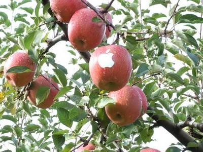 Chùm ảnh: Sáng tạo... cùng logo quả táo của Apple - 5