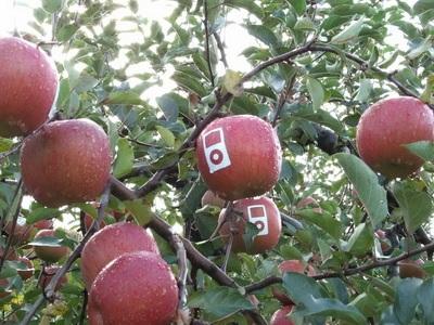 Chùm ảnh: Sáng tạo... cùng logo quả táo của Apple - 6