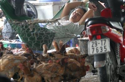 H5N1: Giờ G đang đến gần - 4
