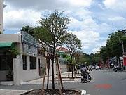 TPHCM: Hàng trăm cây xanh bị chặt bỏ, vì sao? - 1