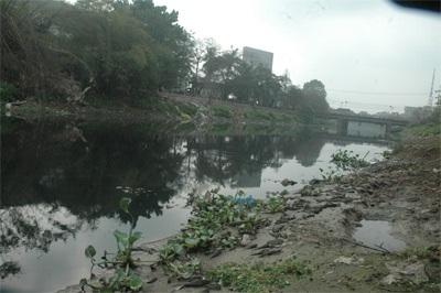 """Cá dọn bể không """"địch"""" nổi với dòng sông ô nhiễm - 2"""