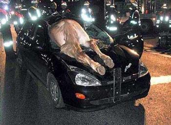 Những vụ tai nạn hi hữu - 3