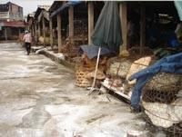 Chợ đầu mối Long Biên chạy… kiểm dịch - 1