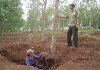 Hủy diệt rừng cao su để tìm cổ vật - 1
