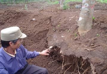 Hủy diệt rừng cao su để tìm cổ vật - 2