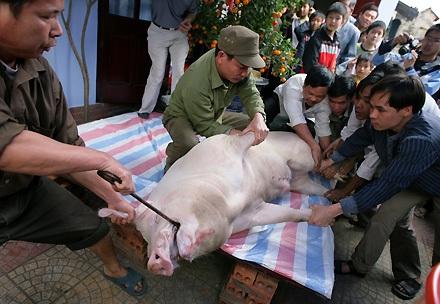 """Lễ tế """"ông lợn"""" đặc sắc ở La Phù - 1"""