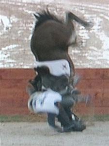 Một VĐV cưỡi ngựa tử nạn tại ASIAD 15 - 2