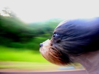 40 bức ảnh tuyệt đẹp nhờ hiệu ứng Motion Blur - 17
