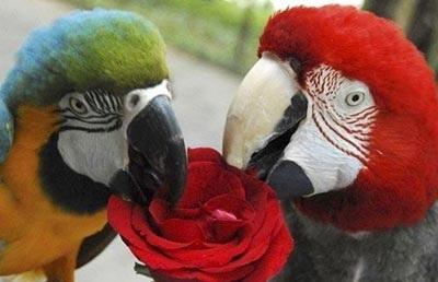 Chùm ảnh: Lễ Tình nhân của các loài động vật - 2