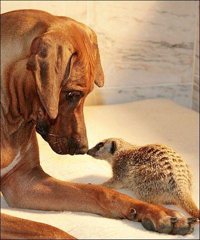 Chùm ảnh: Lễ Tình nhân của các loài động vật - 11