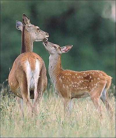 Chùm ảnh: Lễ Tình nhân của các loài động vật - 10