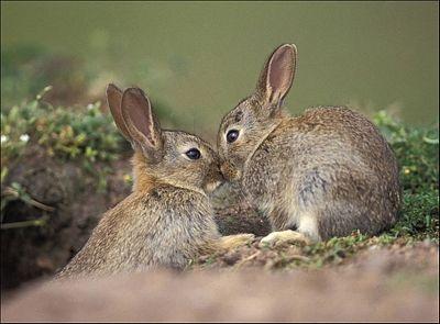 Chùm ảnh: Lễ Tình nhân của các loài động vật - 8