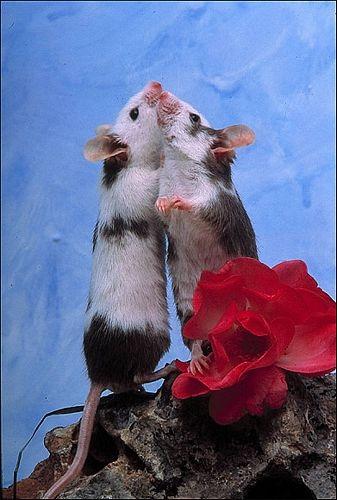 Chùm ảnh: Lễ Tình nhân của các loài động vật - 6
