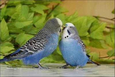 Chùm ảnh: Lễ Tình nhân của các loài động vật - 5