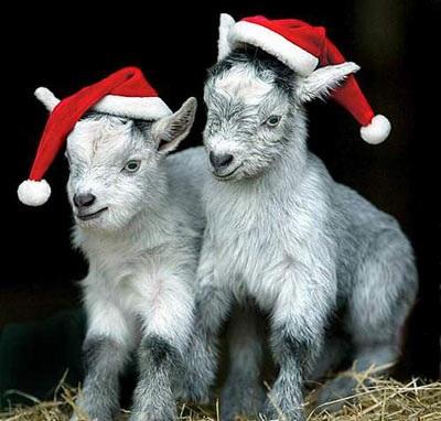 Chùm ảnh: Đón Giáng sinh ở vườn thú - 11