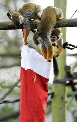 Chùm ảnh: Đón Giáng sinh ở vườn thú - 12