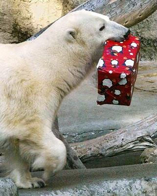 Chùm ảnh: Đón Giáng sinh ở vườn thú - 6