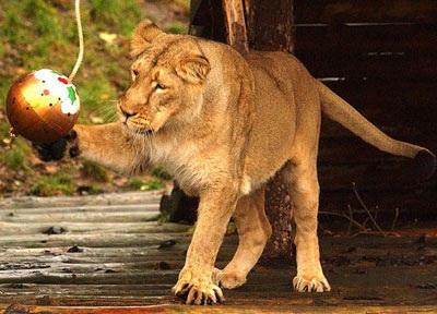 Chùm ảnh: Đón Giáng sinh ở vườn thú - 14