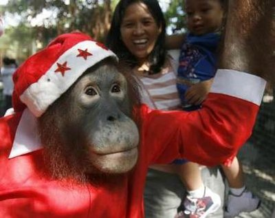 Chùm ảnh: Đón Giáng sinh ở vườn thú - 15