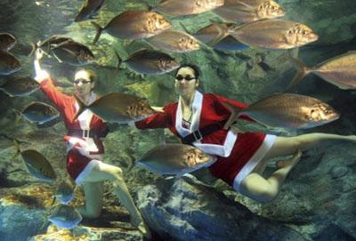 Chùm ảnh: Đón Giáng sinh ở vườn thú - 8