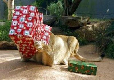 Chùm ảnh: Đón Giáng sinh ở vườn thú - 5