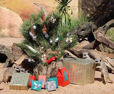 Chùm ảnh: Đón Giáng sinh ở vườn thú - 13