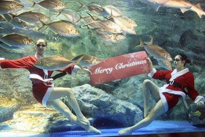 Chùm ảnh: Đón Giáng sinh ở vườn thú - 7