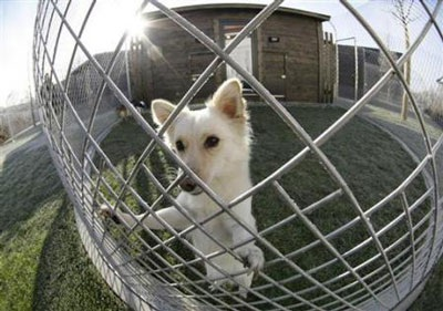 Chùm ảnh: Khách sạn hạng sang cho chó đầu tiên trên thế giới - 1