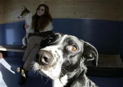 Chùm ảnh: Khách sạn hạng sang cho chó đầu tiên trên thế giới - 2