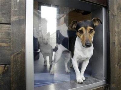 Chùm ảnh: Khách sạn hạng sang cho chó đầu tiên trên thế giới - 4