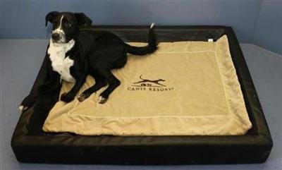 Chùm ảnh: Khách sạn hạng sang cho chó đầu tiên trên thế giới - 6
