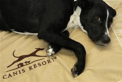 Chùm ảnh: Khách sạn hạng sang cho chó đầu tiên trên thế giới - 8