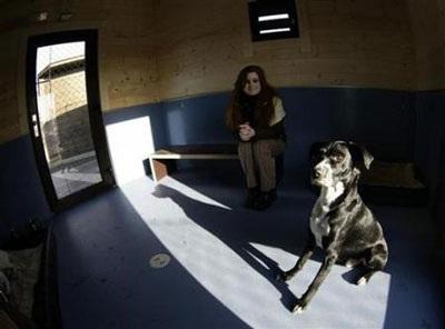 Chùm ảnh: Khách sạn hạng sang cho chó đầu tiên trên thế giới - 9