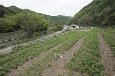 Tiết lộ vụ tàn sát tập thể kinh hoàng ở Hàn Quốc năm 1950 - 13