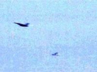 Chùm ảnh báo động máy bay tấn công Nhà Trắng - 1