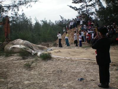 Chùm ảnh: Cá voi hơn 9 tấn dạt vào bờ biển Hà Tĩnh - 5