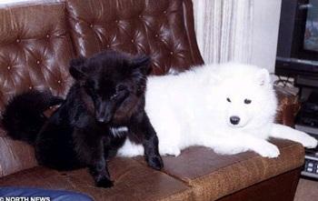 Áo len từ... lông chó - 2