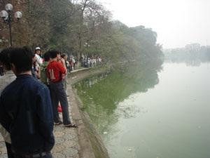 Cụ Rùa Hồ Gươm lại nổi  - 1