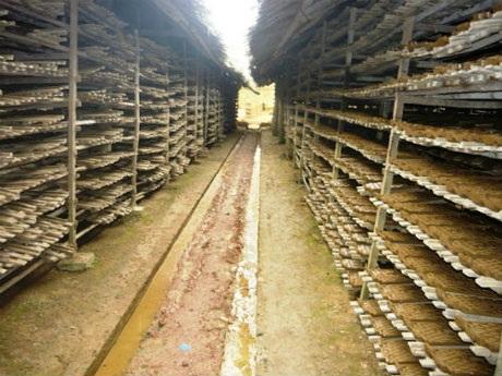 Các xưởng, lò gạch ở Vùng Cừa đã thay đổi cuộc sống của người dân