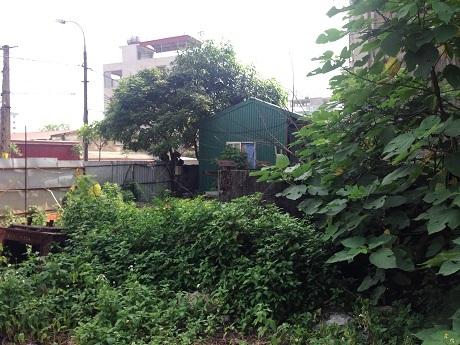 Xung quanh chung cư cây cối mọc um tùm lấn hết đường đi lối lại.