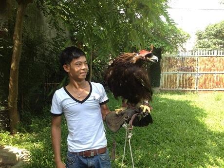 Chú chim đại bàng hoàng kim độc nhất ở Việt Nam