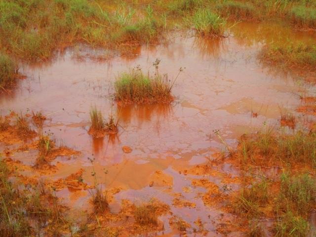 Váng xăng nổi đầy khắp đồng ruộng