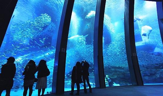 Du khách say sưa chiêm ngưỡng Thế giới cá heo kỳ diệu