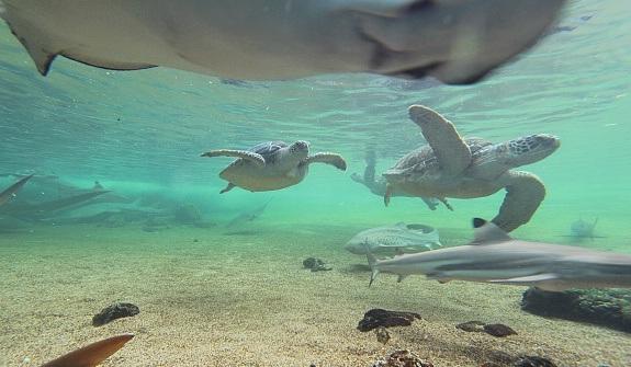 Bể thủy sinh tại Bảo tàng động vật biển