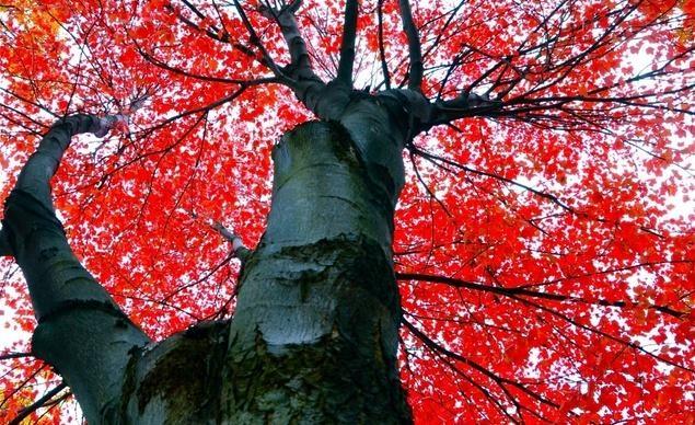 Thu đến mang theo sắc đỏ tới thành phố Ann Arbor thuộc tiểu bang Michigan
