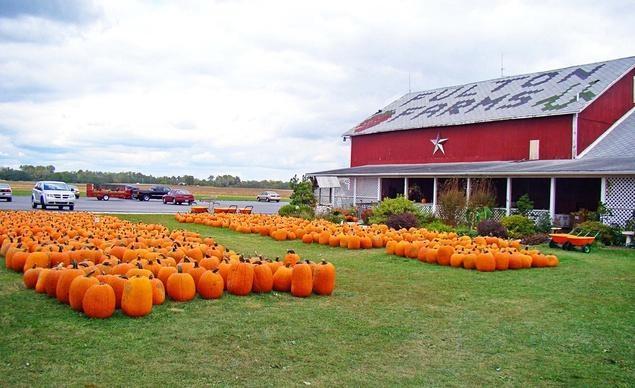 Những quả bí ngô là một biểu tượng của mùa thu tại vùng nông thôn tiểu bang Ohio