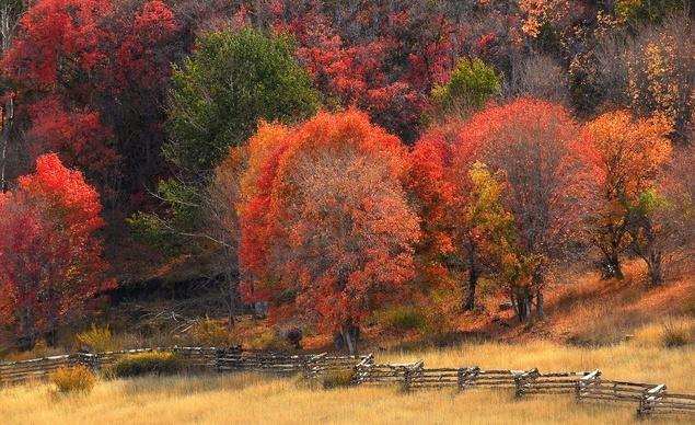 Gam màu đỏ chủ đạo tại khu vực gần thành phố Cedar, tiểu bang Utah