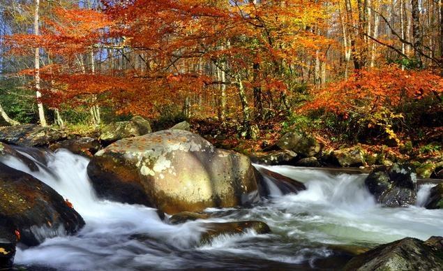 Vườn quốc gia Dãy núi Great Smoky, khu vực bảo tồn lớn nhất ở miền đông nước Mỹ