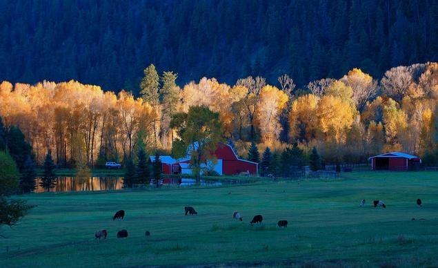 Tại trang trại lạc đà không bướu gần Durango, Colorado