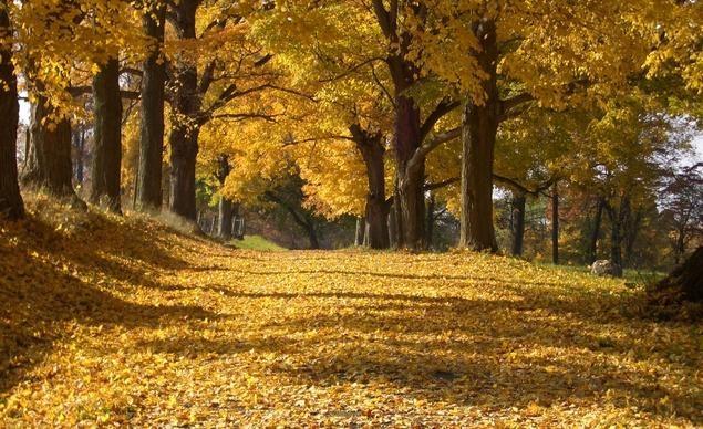 """""""Chiếc áo mùa thu vàng óng tại công viên quốc gia Rockefeller, quận Westchester, New York"""